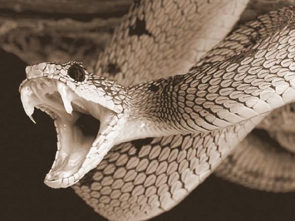 Nằm mơ thấy rắn cắn đánh con gì chắc ăn nhất?