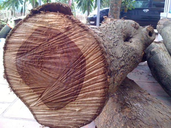 Nằm mơ thấy gỗ đánh số gì, có điềm báo gì tốt hay xấu?